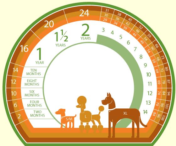 7_age_calculator